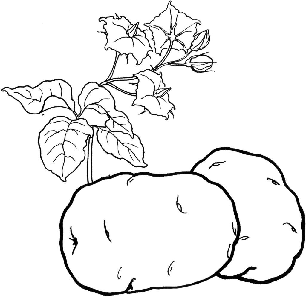 Раскраски фруктов и овощей онлайн
