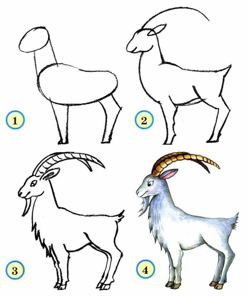 Последовательность рисования животных 4 класс