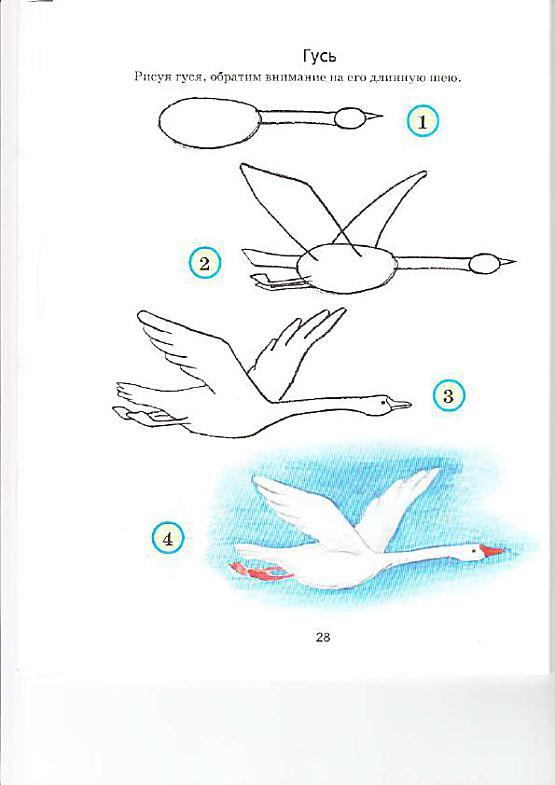 Как нарисовать мне лебедь поэтапно